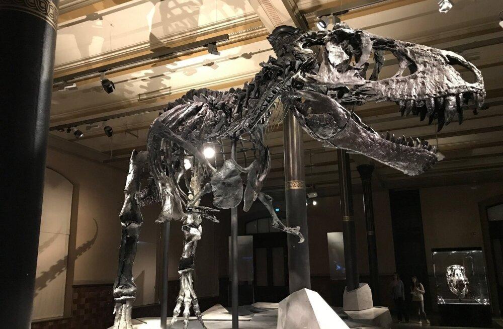 Londoni loodusloomuuseumi poolt tehtud suure vea avastas vaid 10-aastane koolipoiss