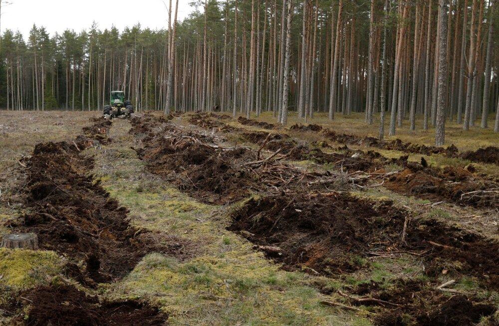 Maapinna ettevalmistamine võib olla tehtud taotluse esitamise või sellele eelnenud aastal.