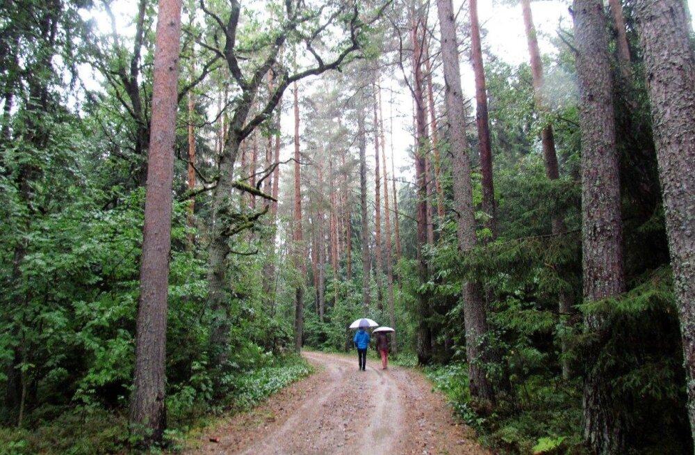 Leili metsalood | Mets mere ja linna vahel