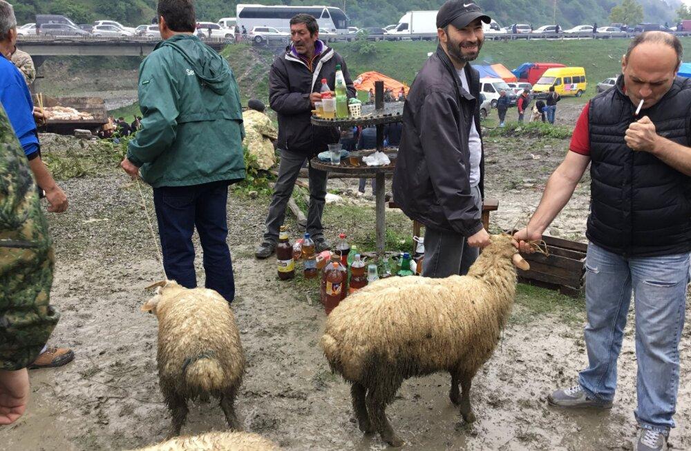 REISIKIRI | Kuidas tuhanded grusiinid veganite kiuste mägedes lambaid ohverdavad