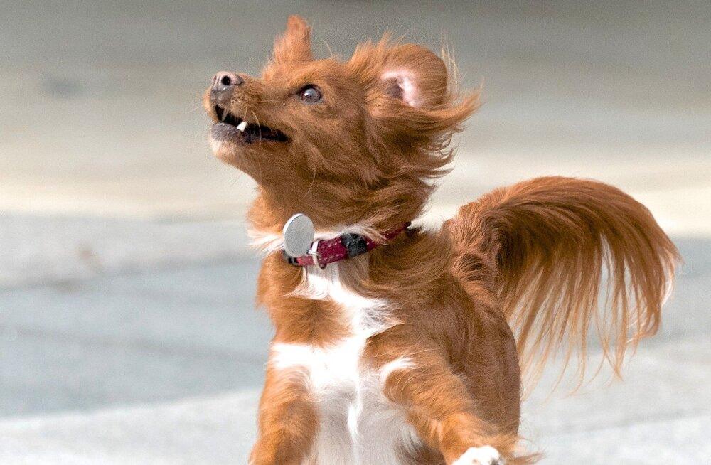TEST | See millise koera sa välja valid, näitab ära, milline sa oma iseloomult tegelikult oled!