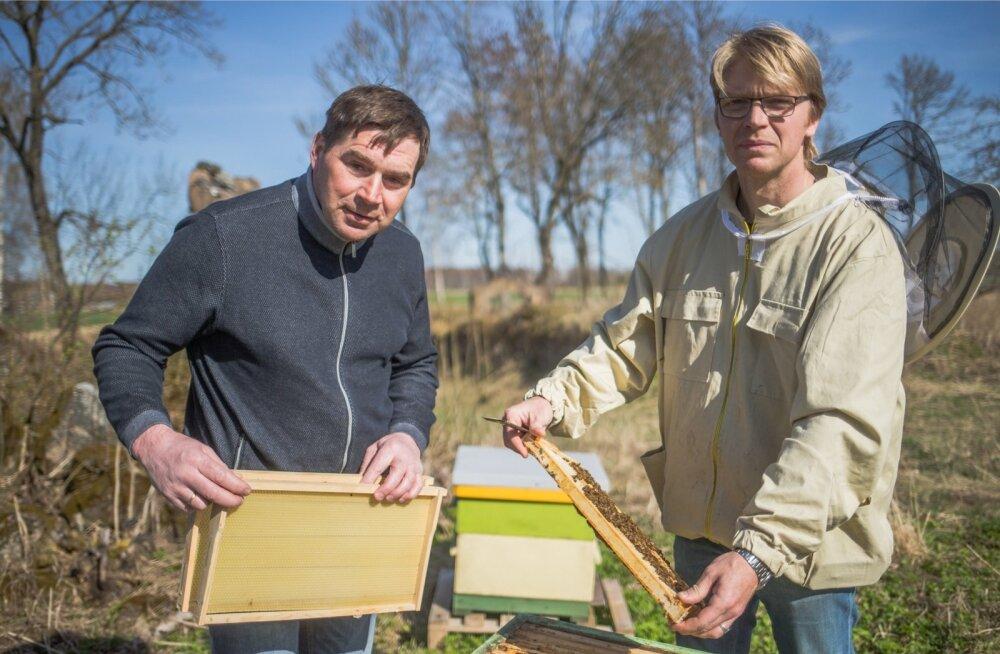 Nii viljakasvataja Madis Ajaots kui mesinik Jaan Eensaar leiavad, et põllumeeste ja mesinike sõbralik kooseksisteerimine on võimalik.