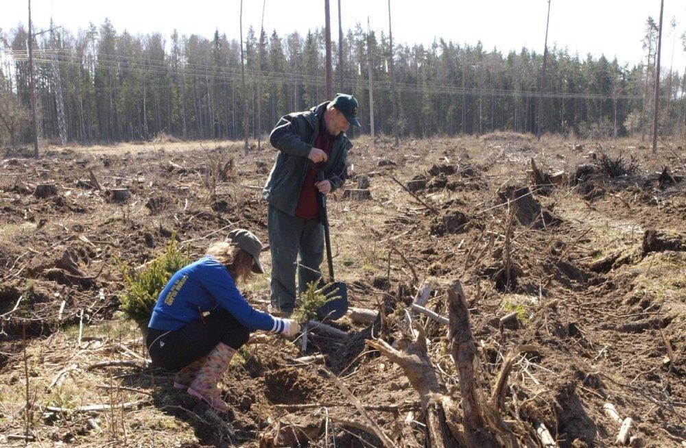 Metsa uuendamise toetust saab küsida tänavu veel kuni 3. detsembrini.