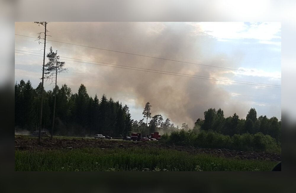 В Харьюмаа горит 40 гектаров леса