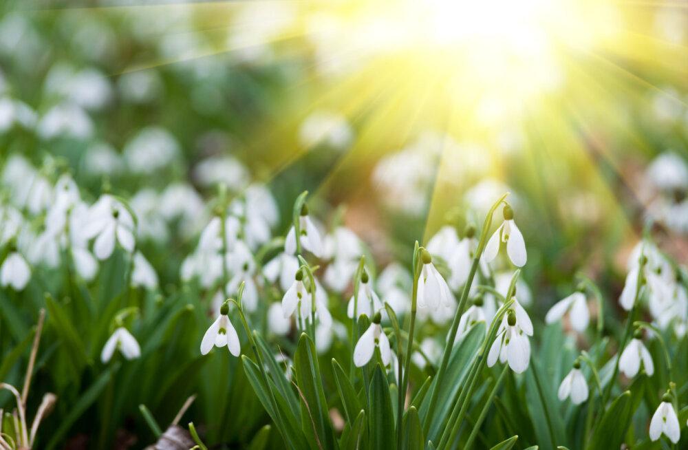 Täna algab kevad: pööripäev toob kaasa uue energia ja väe!