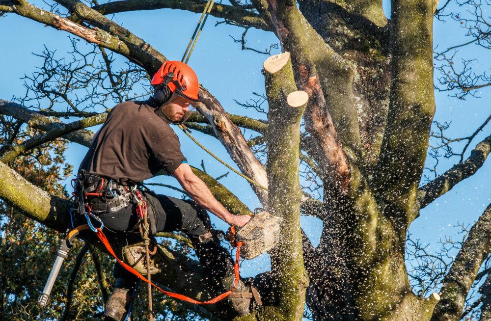 Korteriühistud esitasid haljastustoetuse saamiseks 139 taotlust. Huvituti puude raiest ja muru korrastamisest