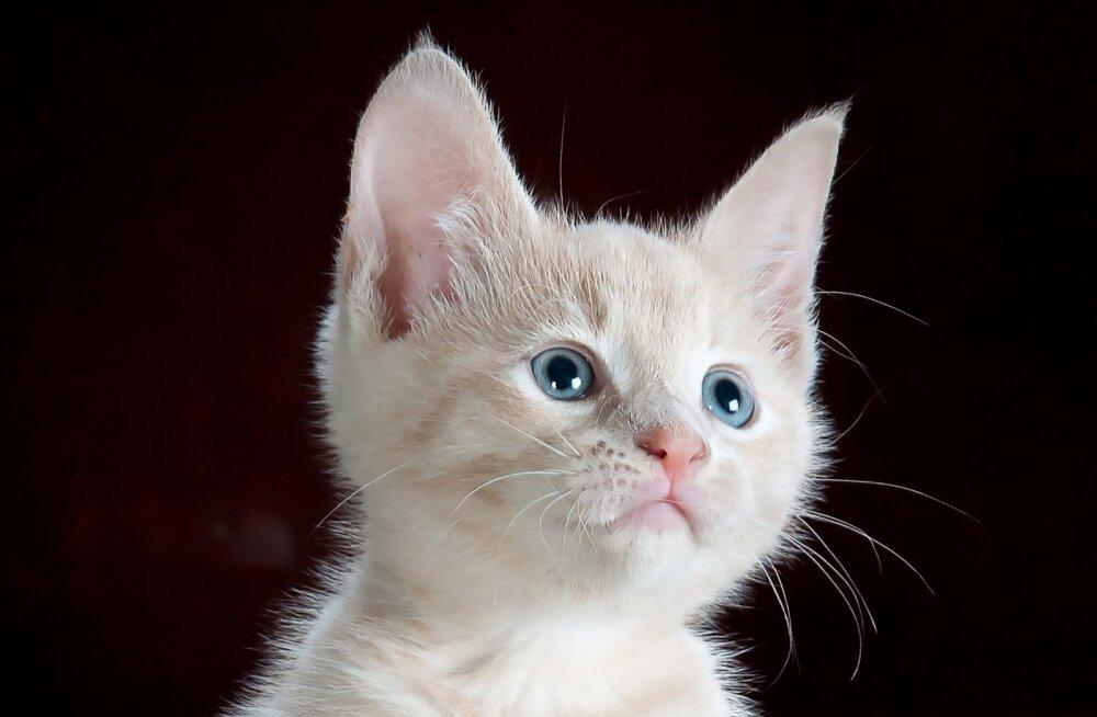 Pesaleidja kassid: mida tähendab korraga 368 kassi eest hoolitsemine?