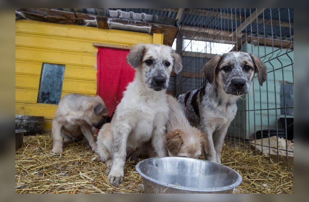 Valga vangla koerad on kõik uue kodu leidnud