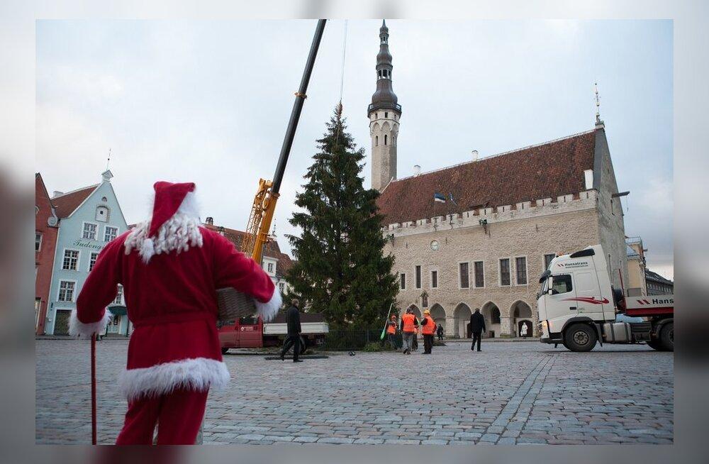 Jõulukuuse toomine Tallinnasse