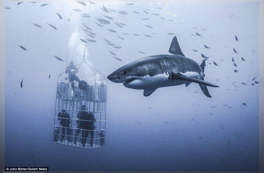 Чем закончилась попытка посмотреть в глаза акуле-людоеду