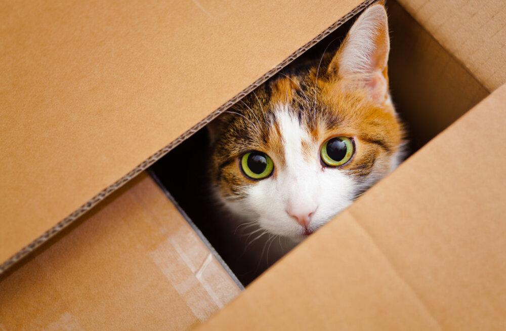 Kust tuleb kassidel komme pappkasti peitu pugeda?