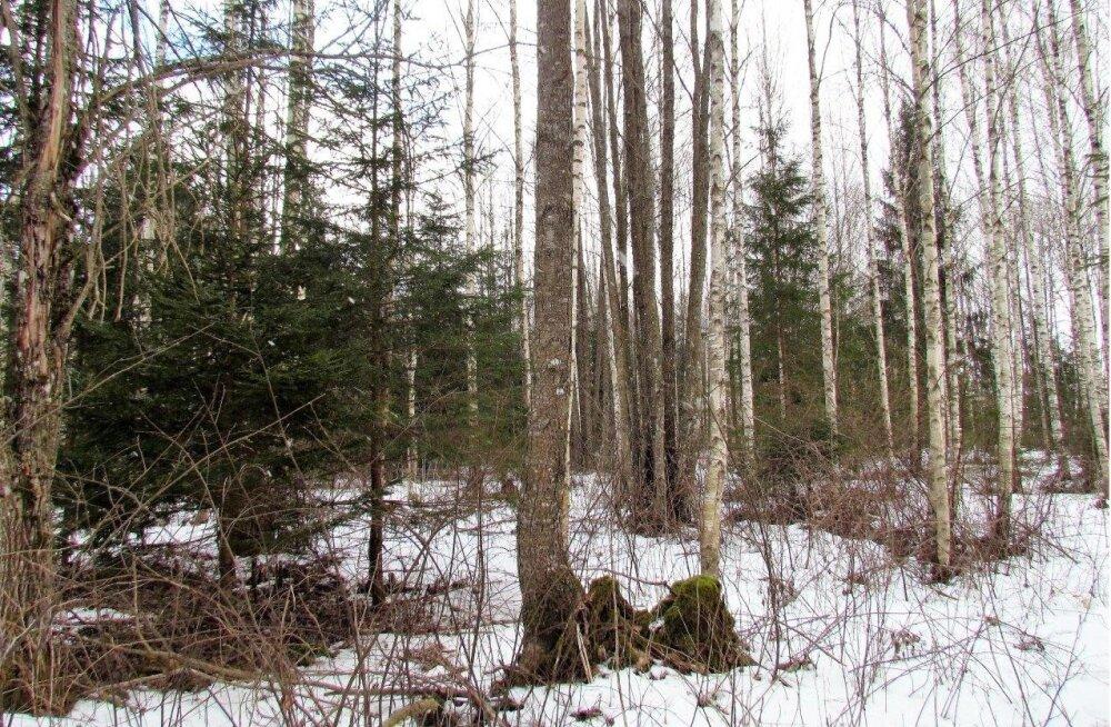Leili metsalood | Metsakarjamaa uus kasepõlvkond