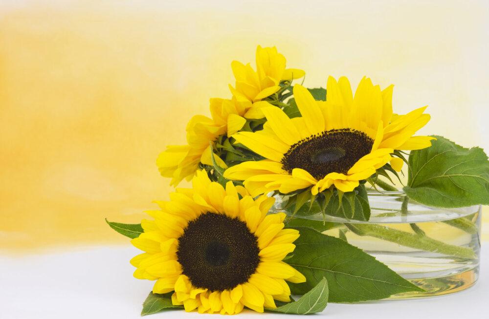 13 maagilist taime   Mis aitab ravida murtud südant ja teeb võimalikuks uue armastuse?