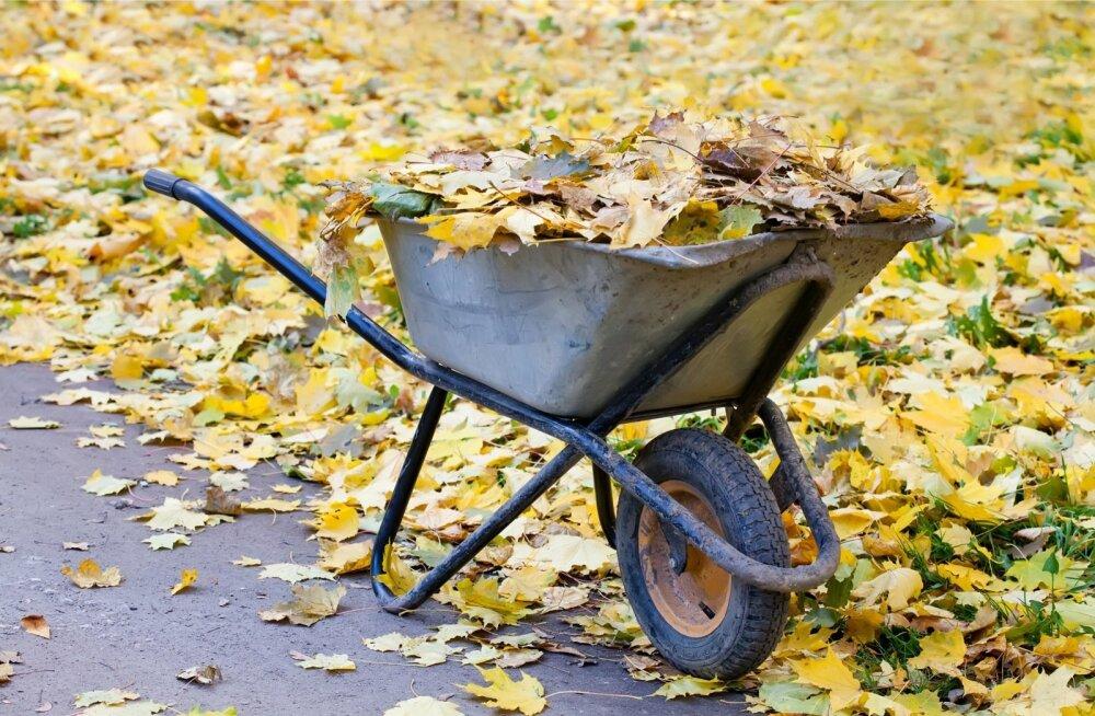Kompostiks sobivad pigem pehmed suured lehed.