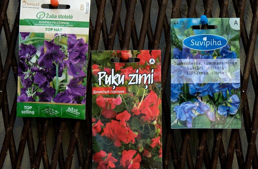 Seemnepakid, seemnepakk, Hansaplant