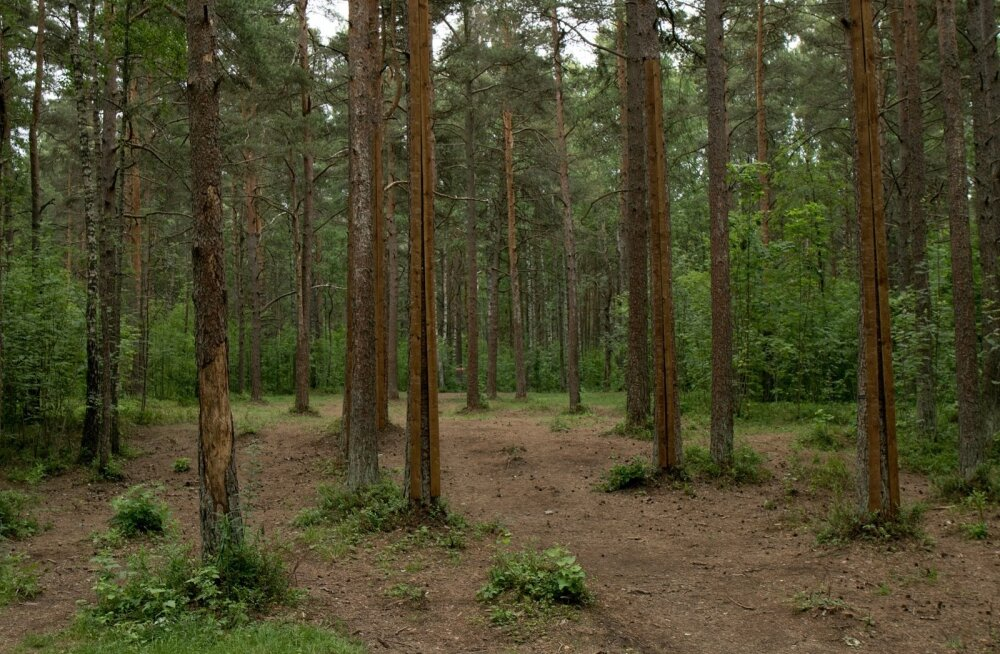 Liivaluiteline mets Mustamäel