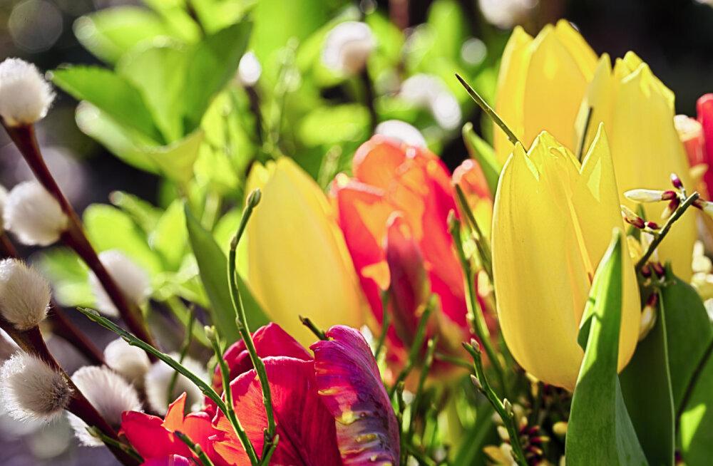 Nädala energiad 26. märts - 1. aprill: oleme teel armastusse ja valgusesse