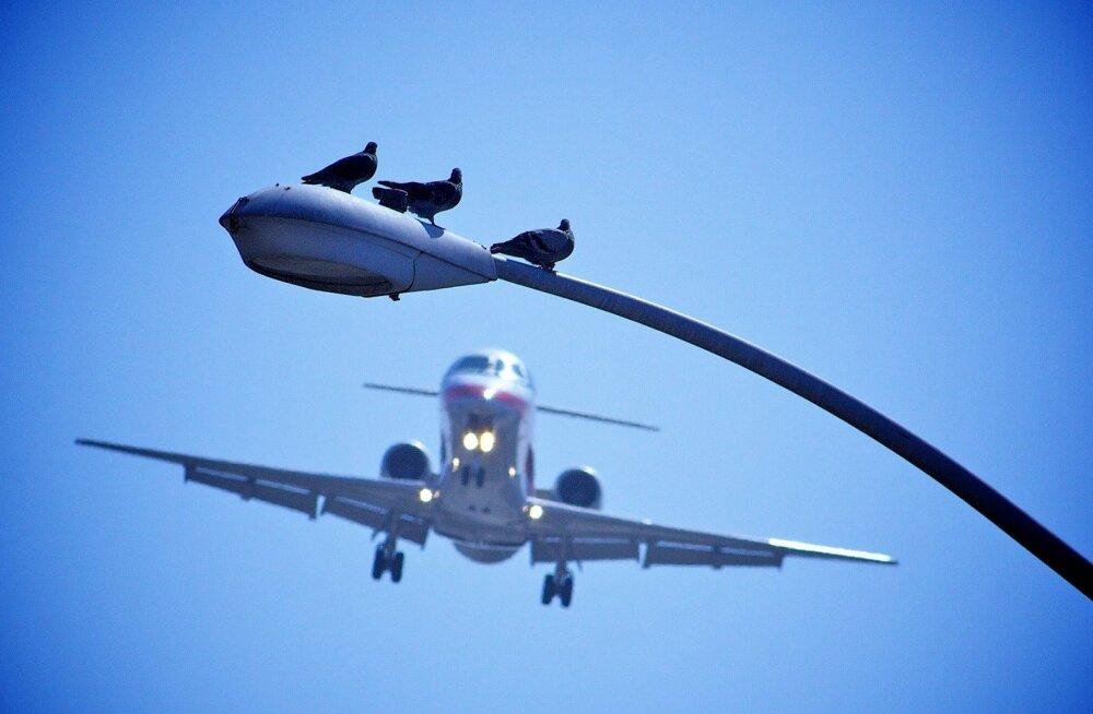 Paradoks: osavalt manööverdavad linnud satuvad sagedamini lennuõnnetustesse