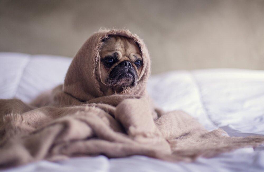 Ученые рассказали чем опасна дневная сонливость