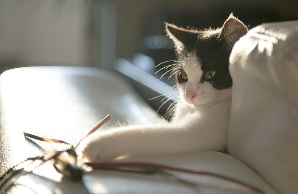 Kass on tüdinud oma leludest? 5 nõuannet, kuidas valida kassile mänguasi, millega ta tõepoolest ka mängib