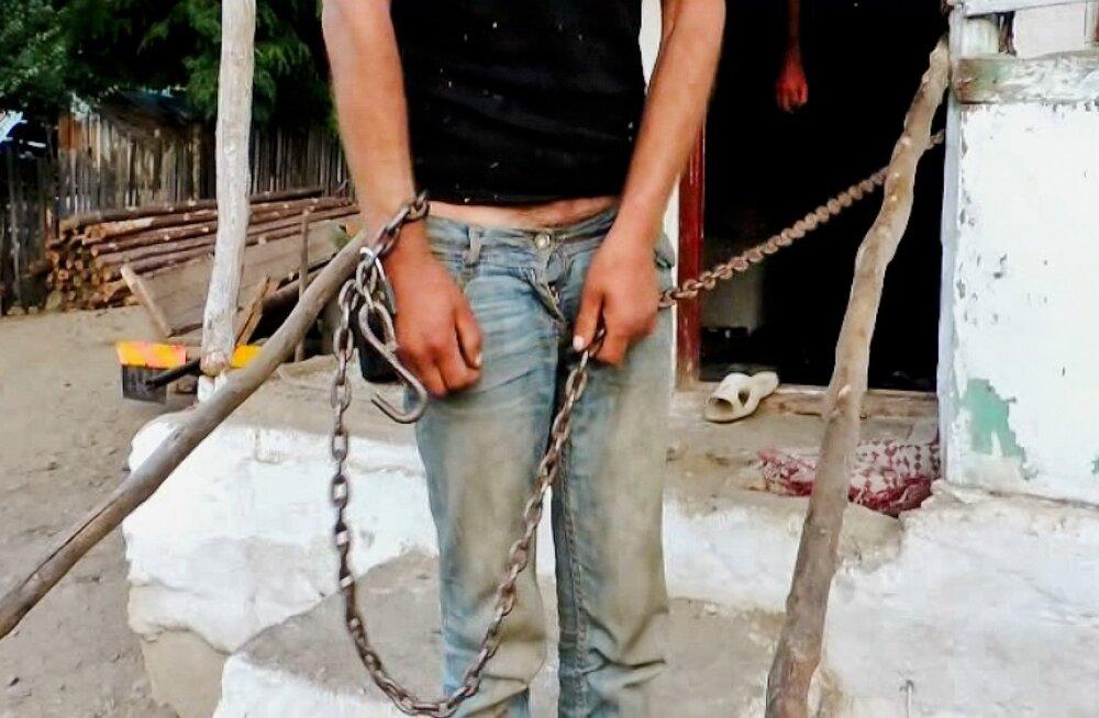 Juulis vabastas Rumeenia politsei Berevoești külas umbes 40 aheldatud orja, keda kasutati nii tööjõuna kui ka poksiringis meelelahutuse pakkujatena.