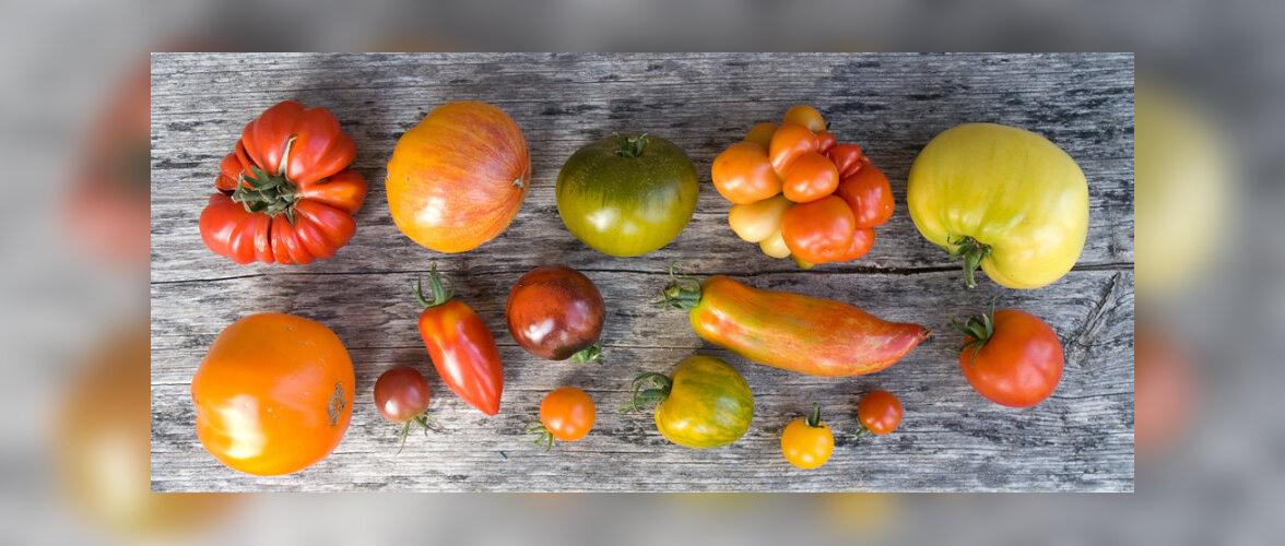 Tomat – ilus ja igale maitsele