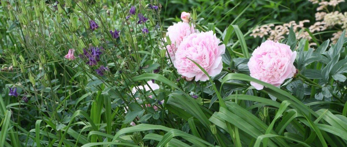 Leidke aiatööde vahel aega õiteilu ja lõhnade nautimiseks.