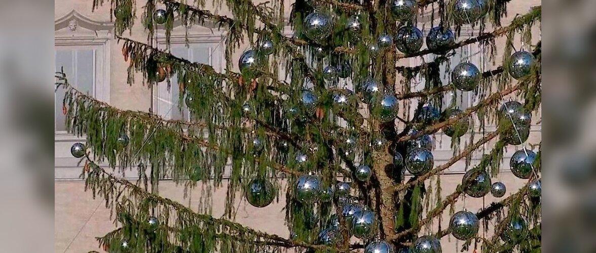 """Как """"лысая"""" рождественская елка стала достопримечательностью Рима"""