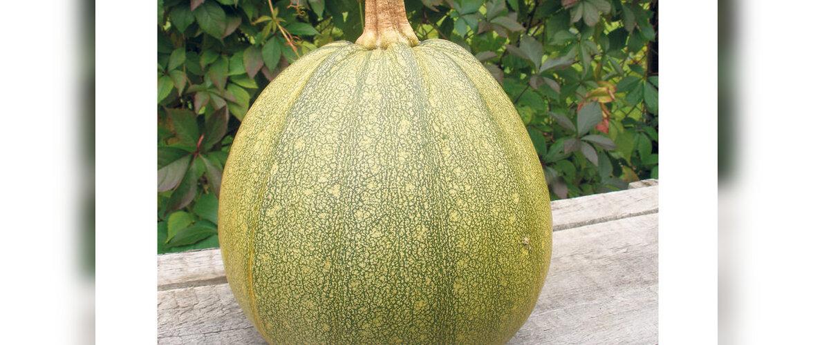 Kõrvits, mille seemneid ei pea koorima