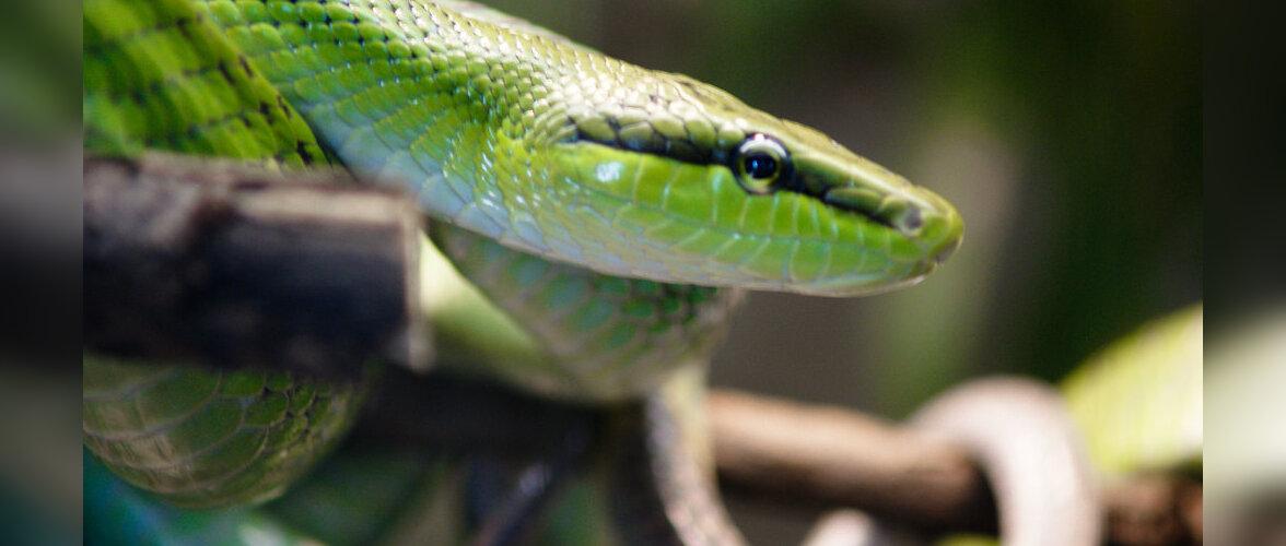 С кем в путешествиях лучше не встречаться: самые опасные змеи в мире