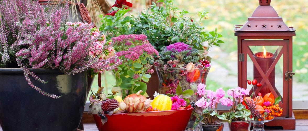 TEE ISE │ 10 näidet, kuidas aed sügiseselt värvikaks sättida