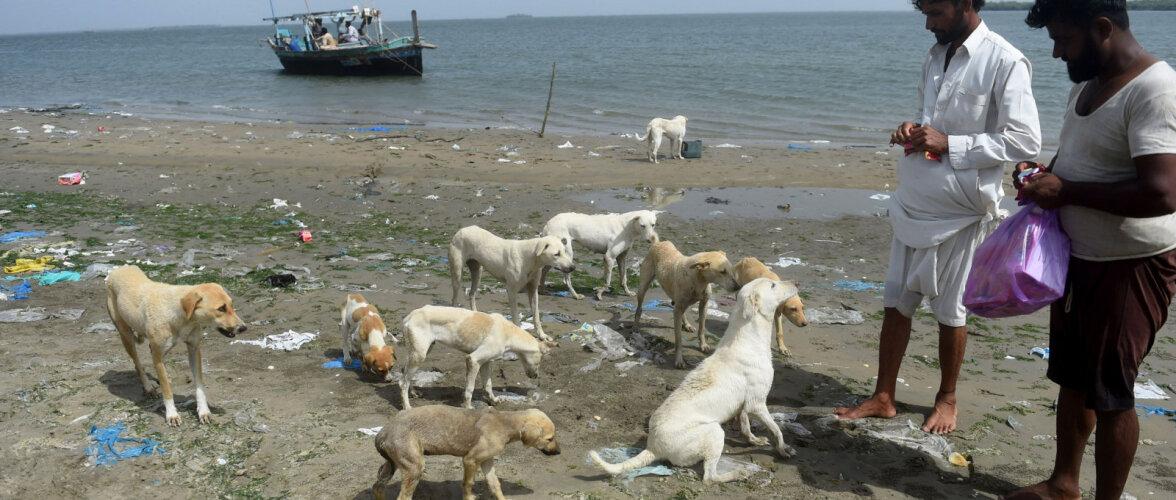 Пакистанские острова населяют 35 000 собак