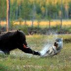 Looduse Aasta Foto konkursi Reisijuhi lugejate lemmik on selgunud!