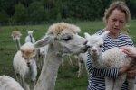 Kui Kaja Varmison ainult tall Gilberti sülle võttis,  ümises ema-alpaka Tessa kaeblikult. Ka teised karja liikmed läksid ärevaks, sest loomad hoiavad kokku. Varmison tunneb kõiki 40 alpakat nägu- ja nimepidi.