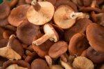 Piksel on seente kasvule ja saagikusele üllatavalt tugev mõju