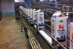 Piimandusgigant tõstab Rootsis hoogsalt piima kokkuostuhinda