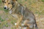 Viga saanud koer