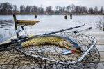 TOIDUVIKTORIIN: Kas tunned ära, milliste Eesti kaladega on tegemist?