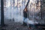 NÄDAL PILDIS: Valgamaal põles mets, kuumalaine täitis rannad ja Nõmme tänavad inimestega, selgus Eesti meister korvpallis