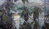 Rododendronid ja teised igihaljad taimed vajavad katet päikese eest.