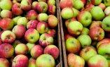 Valgevene õunte sissevedu Venemaale ületas viis korda Valgevene õunasaaki