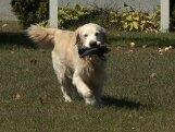 10 olulist viga, mida koera treenides mitte teha!