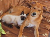 Kes armastavad inimesi rohkem – kassid või koerad?