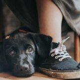 GALERII: Armsad klõpsud aasta koerafotograaf 2017 konkursilt