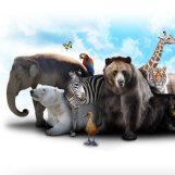 Põnev TEST: Vaata järgi, milline loom Sa eelmises elus olla võisid