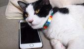 HUUMOR | Kui kassid oskaksid sõnumineerida …