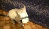Humoorikas VIDEO: Ulakas kassipoeg varastab rahatähe ning keeldub seda tagastamast