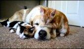 ARMAS VIDEO: Koer magab koos oma kassipoegadega - suurepärane perekond :)