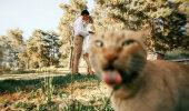 Naerutav GALERII: 15 kassi, kes rikkusid ideaalse foto