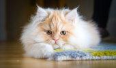 See galerii tõestab, et kassid ei ole tundetud, vaid on sama emotsionaalsed nagu sina